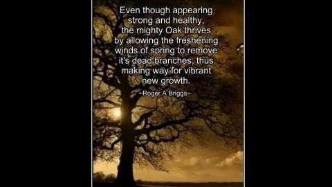 ~ Remember The Oak ~